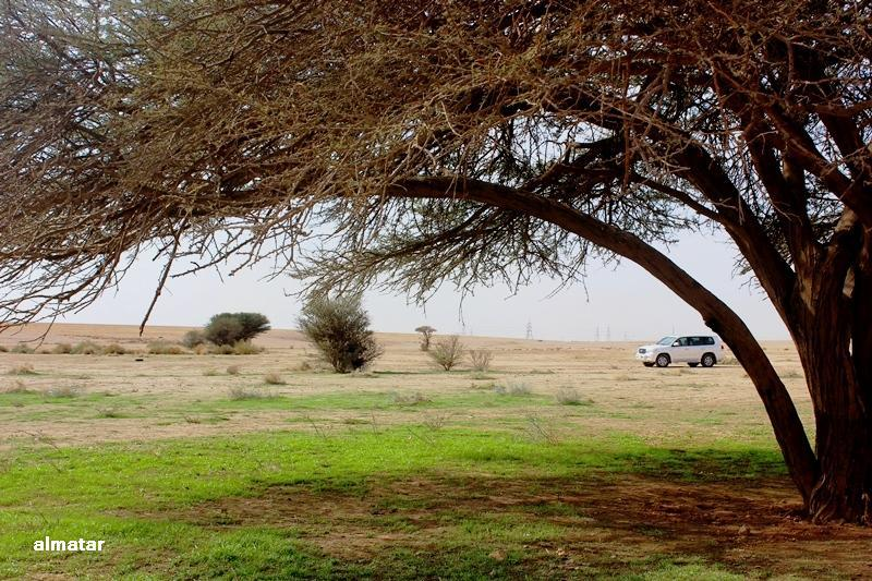 ربيع الرياض العان